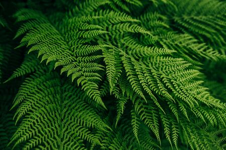 forest flora green fern leaf background Stok Fotoğraf