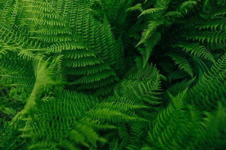 forest flora green fern leaf