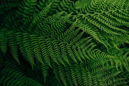 forest natural flora green fern leaf Stok Fotoğraf