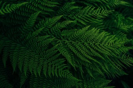 forest flora green fern leaf