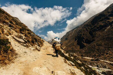 Porter and Sherpa walking with big bag baggage luggage in Himalaya Mountains in Nepal. Khumbu glacier in Everest National Park and people trekking on rocky footpath trail. Stock Photo