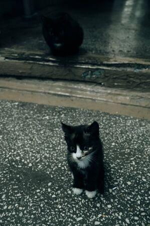 little kitten sitting down on a floor background