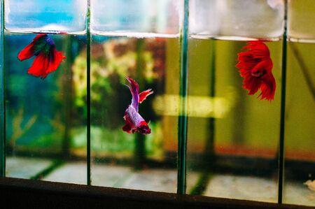 Colored Fish in aquarium in animal shop