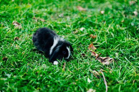 black white rabbit on the grass