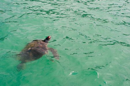 Turtle on the surface of the water