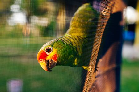 green parrot sitting on a branch behind the net