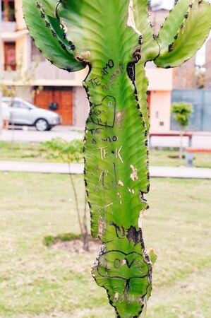 Kaktuspflanzen mit Schäden durch Vandalismus und Graffiti, bei denen Menschen Initialen und Symbole in ihre Oberfläche eingraviert haben Standard-Bild