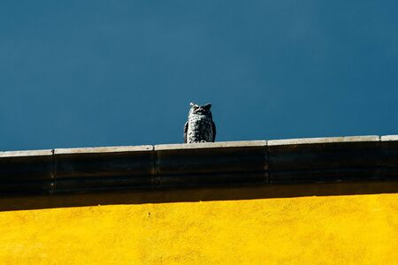 artificial owl sitting on the roof of the house