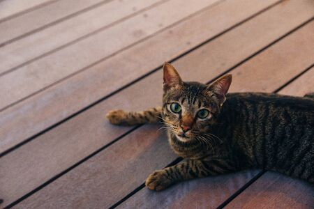 cat on a wooden floor at sunset, bali