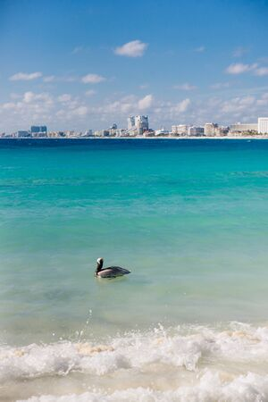pelicans on the beach in cancun