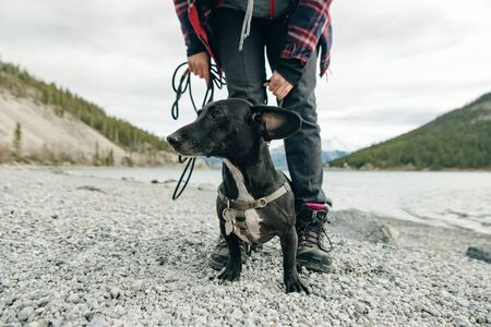 Miniature wire-haired dachshund stands on a gray stones at the feet of the owner