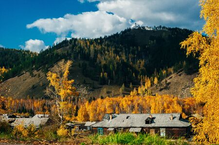 Yellow wooden Russian house and autumnal larch