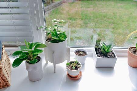 Beautiful succulent plants in stylish flowerpots on windowsill. Home decor. Standard-Bild