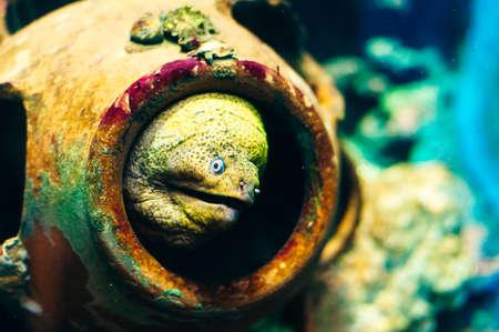 underwater photo of sea fish at Phuket Aquarium, Thailand.