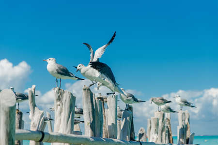 seagulls on old gray logs against a blue sky. Isla mujeres, mexico Banco de Imagens