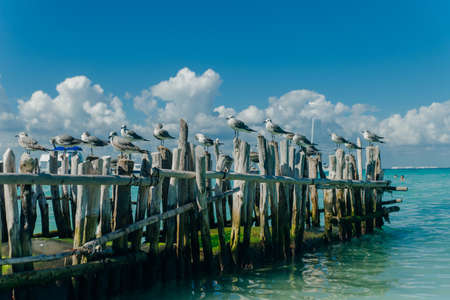 seagulls on old gray logs against a blue sky. Isla mujeres, mexico Banco de Imagens - 151556508