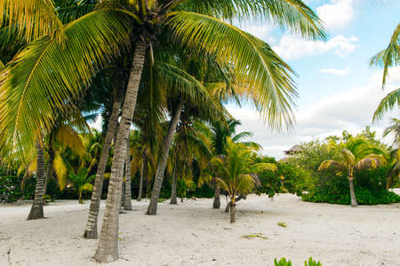 Scenic landscape of palm trees, clouds and tropical beach in mexico. 스톡 콘텐츠