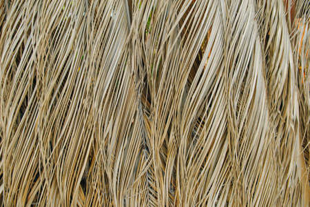 dry palm leaves background in mexico.