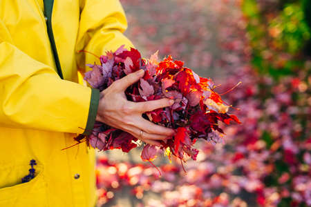 girl in a yellow raincoat holds red leaves in her hands. autumn Banco de Imagens