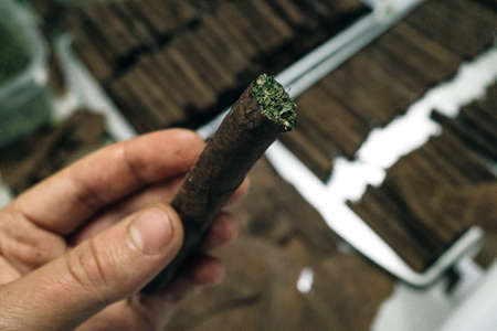 joint from tobacco leaves and marijuana Banco de Imagens