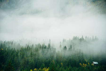 Misty landscape with spruce forest in hipster vintage retro style.