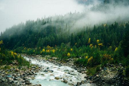 Misty landscape with spruce forest in hipster vintage retro style Reklamní fotografie