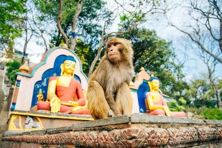 Sitting monkey on swayambhunath stupa in Kathmandu, Nepal - may, 2019
