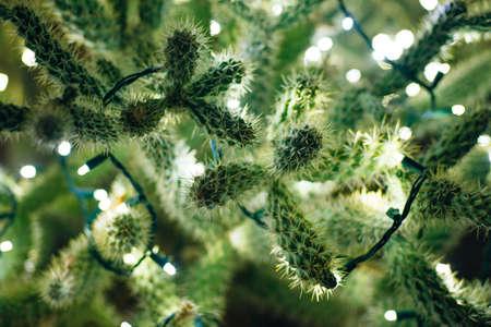 Botanical Cactus Garden las vegas. - dec, 2019 Colorful light display of cactus Redakční