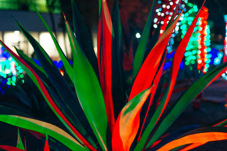 Botanical Cactus Garden las vegas. - dec, 2019 Colorful light display of cactus Reklamní fotografie