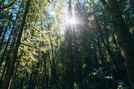 Sunrays filtering thru the forest foliage in a Vancouver park, British Columbia, Canada Banco de Imagens