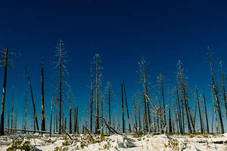 Burned trees in winter against the blue sky. bryce national park. Banque d'images - 167008812