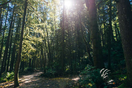 Sunrays filtering thru the forest foliage in a Vancouver park, British Columbia, Canada.