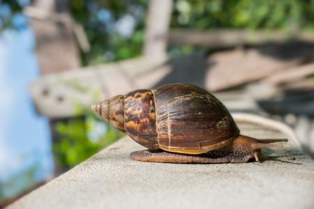 mucus: Garden snail isolated