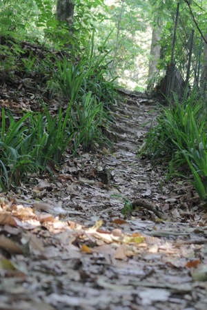 finder: Path Finder