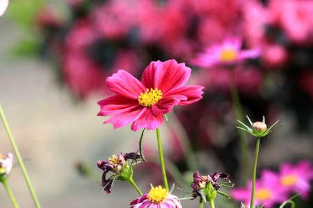 flower show: Flower Show Snap
