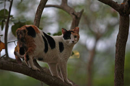 Cat on tree photo