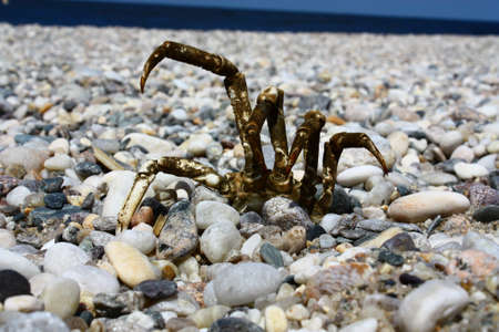 way out: Determined crab digs its, way out of a stony beach hiding place with shoreline in background Stock Photo