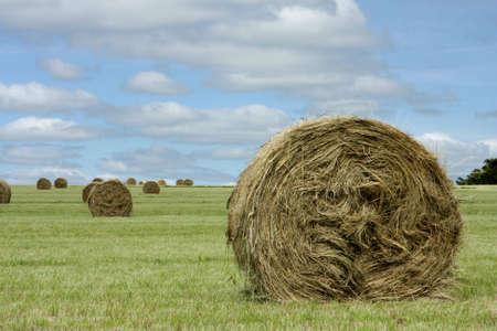 A landscape scene of field at a farm