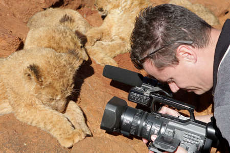 A man recording the lion cubs Stock Photo