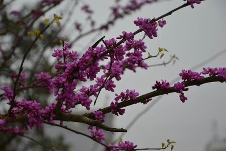 sexy pink: unknown sexy pink flower