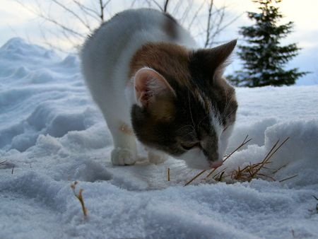 a cat outdoors in the snow after a storm Stock Photo