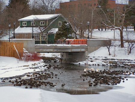 a duck pond full of birds in the winter