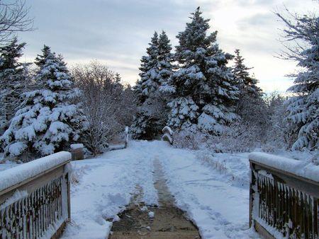 a path running through some snowey trees Stock Photo