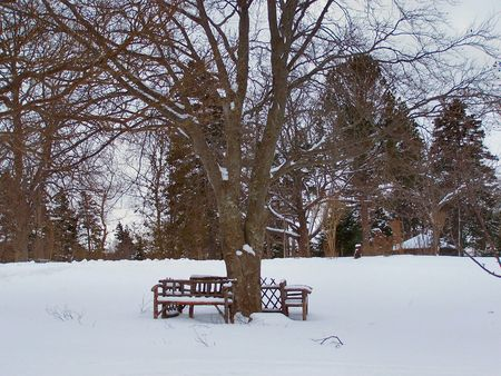 a park bench under a large tree covered in snow Stock Photo