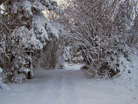 a wooded trail after a winter blizzard Stock Photo