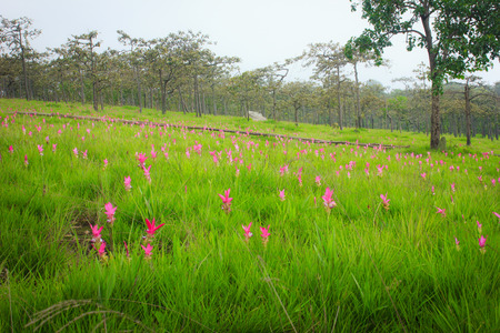 wilding: lot of pink flowers in the green grass Stock Photo