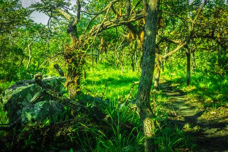 plentiful: the little way in the forest plentiful