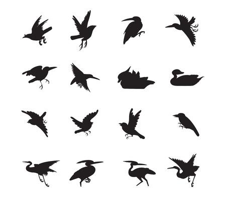 with duck: estilo de las aves y Siluate pato del vector de color negro Vectores
