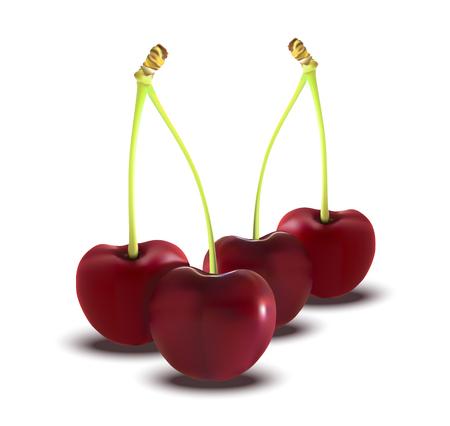 savory: Illustration of brunch fresh ripe cherries