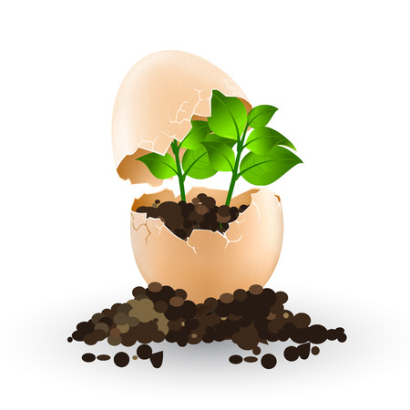 egg plant: A little plant grows in an egg vector Illustration